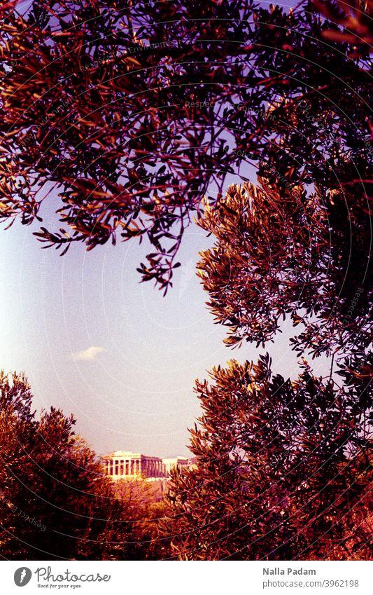 Antikes Gebäude in Athener Oberstadt analog Analogfoto Farbe Akropolis Bäume Äste Himmel Griechenland Parthenon Architektur alt Wahrzeichen historisch antik