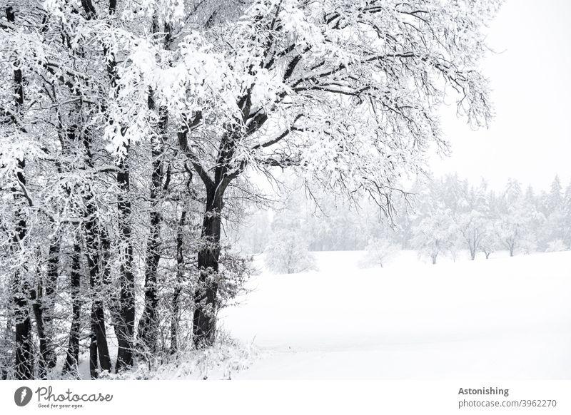 eingeschneite Landschaft Schnee Natur Wald Mühlviertel Österreich Winter weiß Schneelandschaft kalt Kälte Baum Zweige Hügel hell Schneefall Außenaufnahme