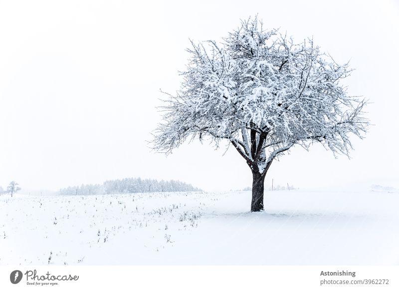 einsamer Baum im Schnee Winter Natur Landschaft Pflanze weiß Himmel Baumkrone kalt Außenaufnahme Frost Tag Umwelt Wetter Rinde Winterlandschaft Wald Horizont