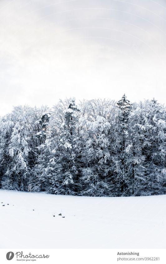 Winterwald Schnee Wald Himmel dicht Baum Bäume Landschaft Natur Nadelbaum Mischwald kalt Kälte schneien Spur Winterlandschaft Schneelandschaft Menschenleer Ruhe