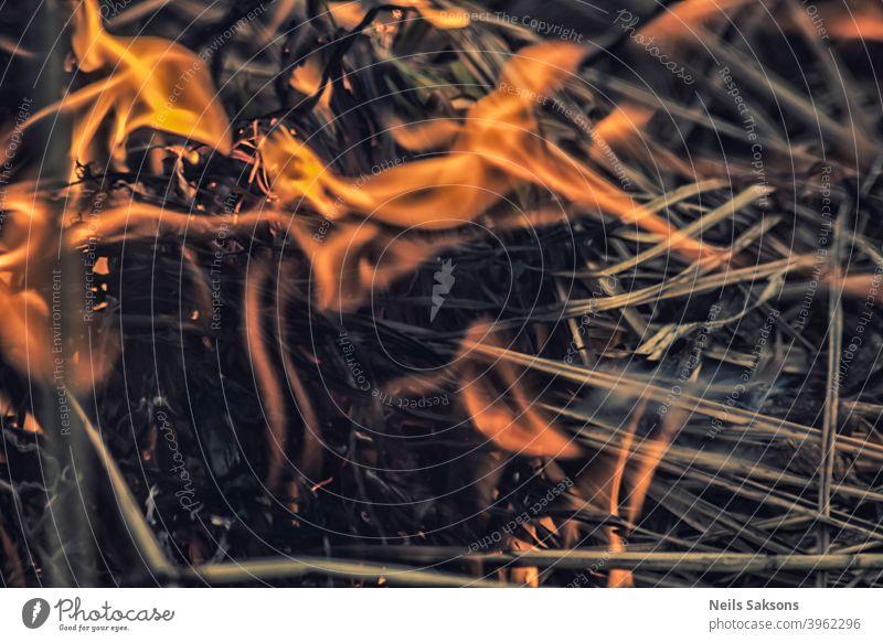 Lagerfeuer des trockenen Grases im Frühling abstrakt Asche Hintergrund schwarz Freudenfeuer hell braun Brandwunde brennend Buschfeuer schließen Nahaufnahme