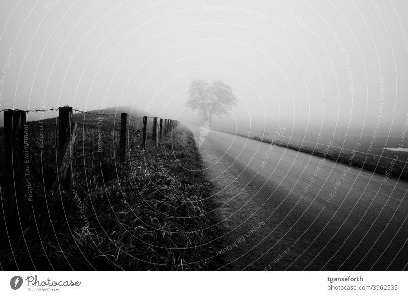 Emsdeich im Nebel Nebelstimmung Außenaufnahme Landschaft Deich Zaun Wege & Pfade Baum Tag schlechtes Wetter Winter grau Menschenleer Landkreis Emsland ländlich