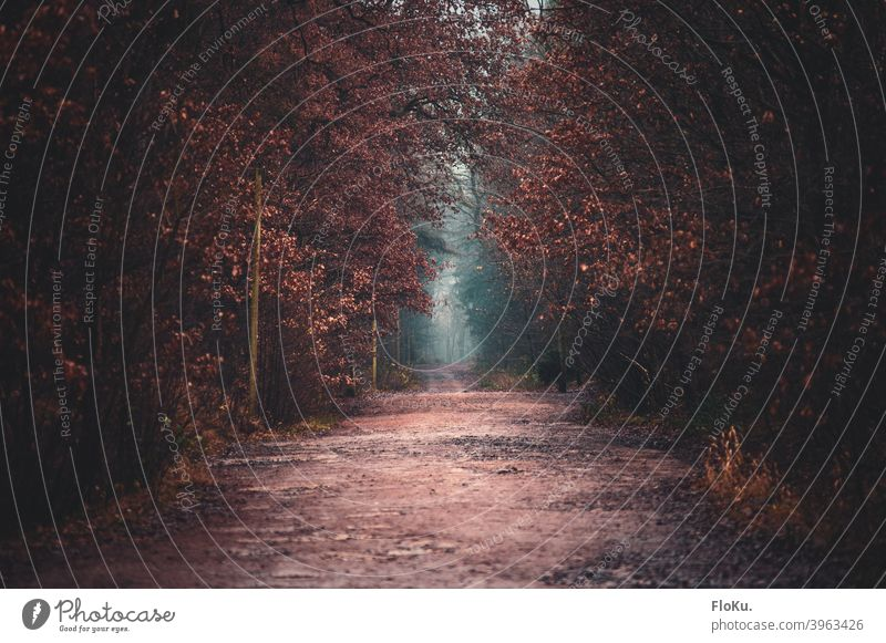 Waldweg im Herbst bei diesigem Wetter Weg Pfad Straße Natur Laub Laubfärbung braun Bäume Baum wandern Spaziergang Landschaft Herbstlaub Umwelt Außenaufnahme