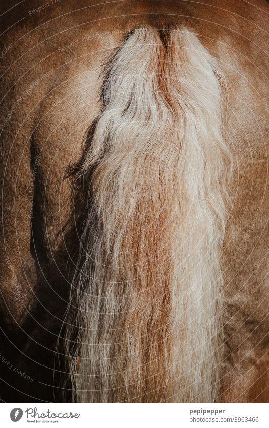 Pferdeschweif Außenaufnahme Makroaufnahme Schwanz Haare & Frisuren Schweif Rücken Fell Mähne braun Detailaufnahme Nutztier Ponys natürlich Tierporträt Wildtier