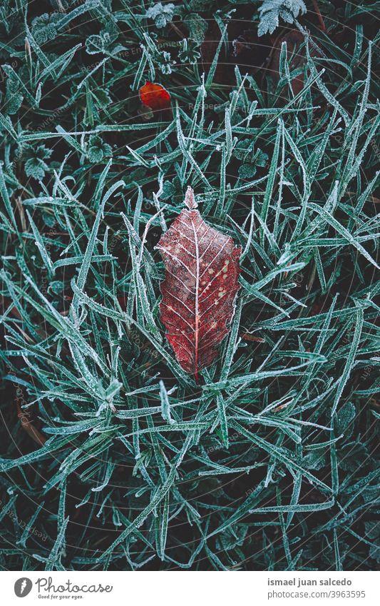 gefrorenes braunes trockenes Blatt in der Wintersaison Blätter trocknen Frost frostig Schnee Eis Boden Natur natürlich Laubwerk Saison abstrakt texturiert
