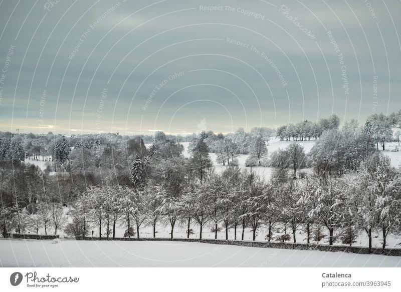 Verschneite Winterlandschaft, mit Wiesen, Baumreihen und Hecken Jahreszeit Weiß Pflanze Natur Landschaft Tageslicht Kälte Schnee Witterung Wetter Himmel Wolken