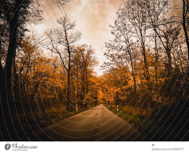 Straße durch den Wald Herbst Herbststimmung Bäume Stille Auf dem Weg nach Hause