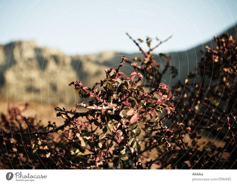 Strauchwerk Himmel Natur Ferien & Urlaub & Reisen Pflanze schön Sommer Landschaft Ferne Berge u. Gebirge Freiheit Stimmung Kraft Tourismus authentisch Sträucher wandern