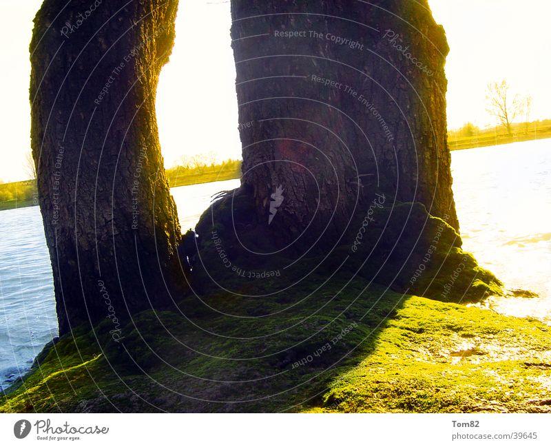 baum am wasserrand Natur Wasser Baum Sonne