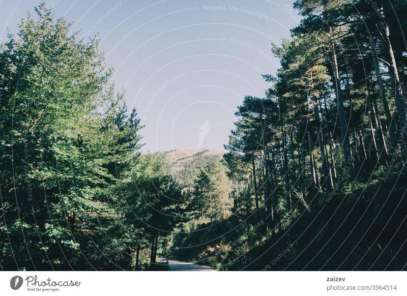 grüne landschaft mit vielen bäumen in katalonien, spanien Katalonien Natur Holz Schönheit blau hell Cloud Laubwerk Straße Felsen Landschaft malerisch Himmel
