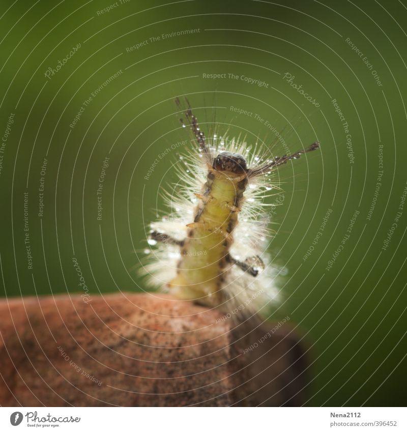 Sonnengruß Umwelt Natur Wassertropfen Sommer Schönes Wetter Freude Glück Lebensfreude Vorfreude Begeisterung Coolness Yoga Raupe Insekt Insektenlarve Behaarung