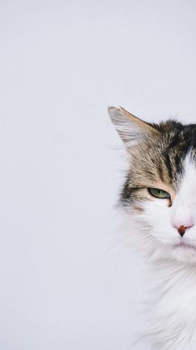 angeschnittenes Porträt einer Katze, langhaarig getigert - ein grünes Auge blickt rätselhaft, das Ohr angerissen Kater Katzenporträt Profil Tier Haustier