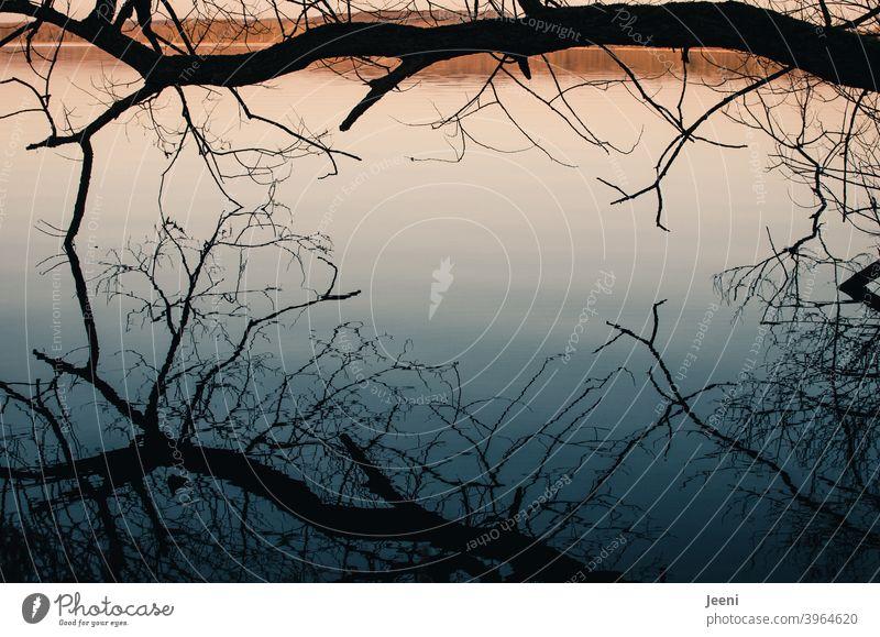 Kalter Wintertag | Spiegelung eines Baumes im See, der dicht über der glatten Wasseroberfläche hängt Spiegelung im Wasser Stimmung ruhig Ruhe Licht Sonne