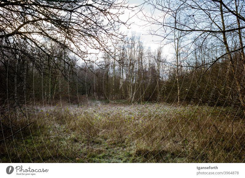 Lichtung im Moor Birkenwald Menschenleer Farbfoto Außenaufnahme Landschaft Wald Natur Winter natürlich naturbelassen wild Wildpflanze Gedeckte Farben Waldboden