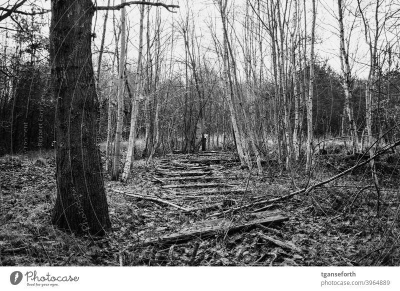 alter Bohlenweg im Moor Moorbirke Wege & Pfade verrotten verrottend verrottet Vergänglichkeit Außenaufnahme Landschaft Menschenleer Wald Schwarzweißfoto Verfall