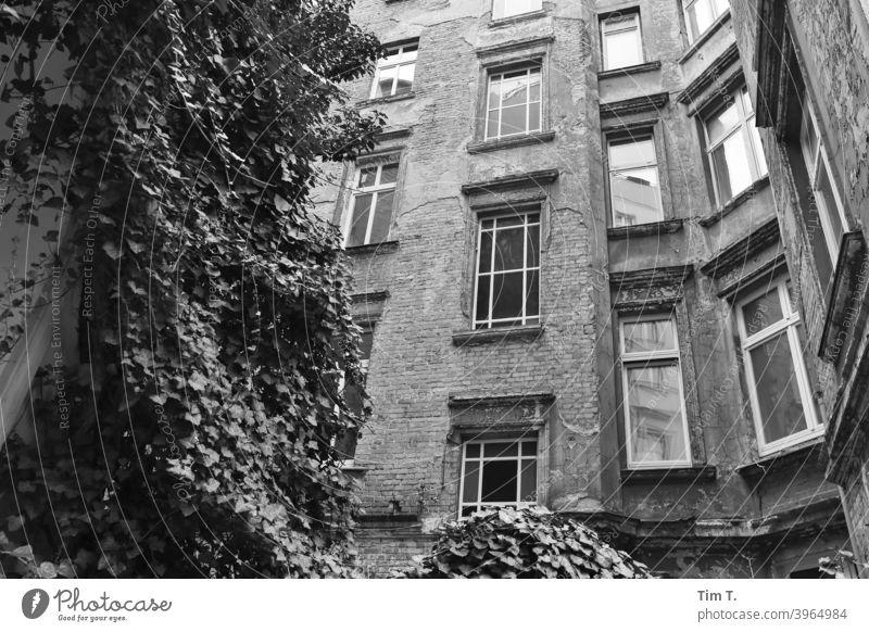 Hinterhof Prenzlauer Berg Berlin Haus Fenster Fassade Stadt Menschenleer Stadtzentrum Altbau Altstadt Hauptstadt Tag Bauwerk Außenaufnahme Gebäude Altbauwohnung