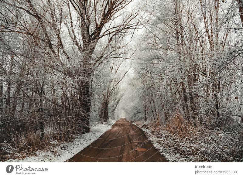 Leise rieselt  der Schnee - still und leise bedeckt er Wald und Flur - Winter Wintertraum Schneeflocken Schneedecke Außenaufnahme Menschenleer Schneefall Natur