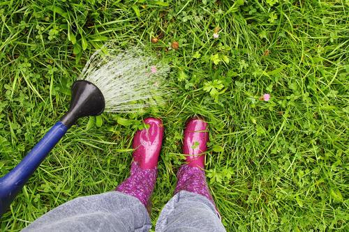 Eine Frau mit pinken Gummistiefeln gießt mit einer Gieskanne den Rasen gummistiefel nass nässe regen gießen gießkanne rasen wasser wasserfest frau füße beine