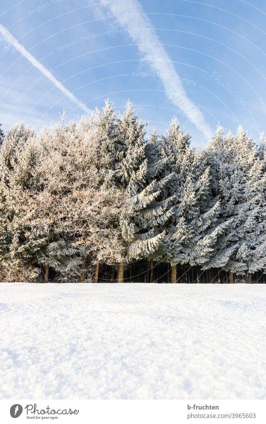 Winterwald, Winterlandschaft, Kalter Wintertag Schnee kalt Wald Baum Natur Frost Außenaufnahme Winterstimmung Schneelandschaft Schneedecke Tag