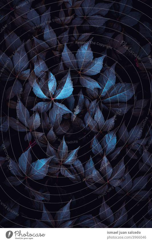 blaue Pflanze Blätter im Winter Saison, blauen Hintergrund Blatt grün farbenfroh Garten geblümt Natur natürlich Laubwerk dekorativ Dekoration & Verzierung