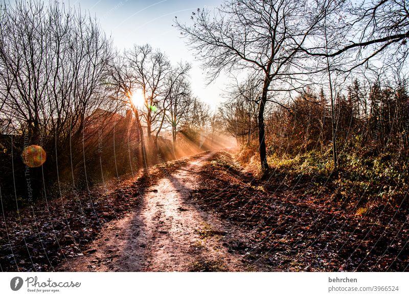 morgenstund hat gold im mund Herbstlandschaft Blätter Herbstwetter fallende Blätter Sonnenlicht Kontrast Licht Außenaufnahme Farbfoto Fußweg schön fantastisch