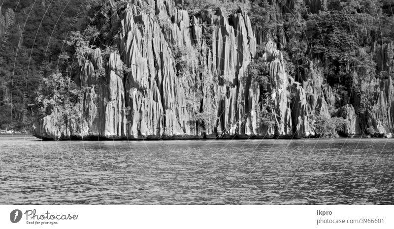 Blick von einer Klippe auf die wunderschöne Paradiesbucht Krone See Kajangan Philippinen Insel palawan Lagune tropisch Hintergrund Natur blau Landschaft Sommer