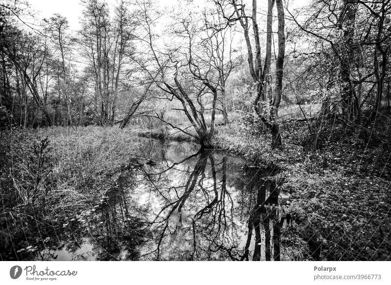 Kleiner Fluss, der durch einen Wald fließt Baumreflexion Umwelt Kunst Herbst Wolken friedlich Sommer dunkel sonnig Tag Europa Park verschneite reisen Tapete