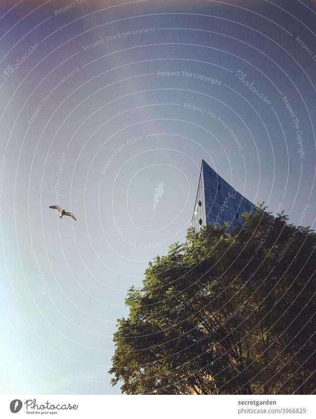 Vogelperspektive Elbphilharmonie Hamburg Baum himmel vogel fliegen Sehenswürdigkeit Hafenstadt Wahrzeichen maritim Licht außergewöhnlich Bauwerk Gebäude