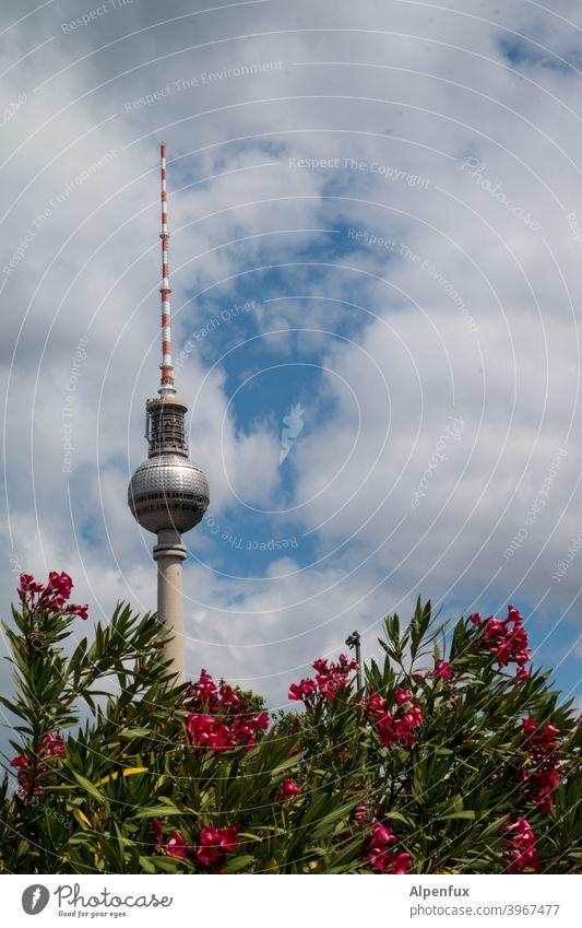 Berliner Pflanze Fernsehturm Berliner Fernsehturm Himmel Wahrzeichen Hauptstadt Architektur Alexanderplatz Turm Stadt Stadtzentrum Sehenswürdigkeit Berlin-Mitte