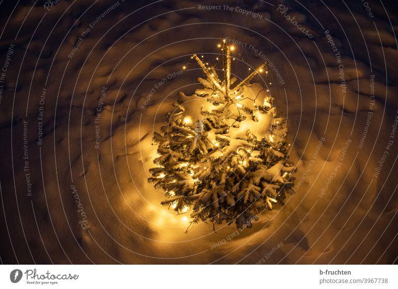 ein Weihnachtsbaum mit Weihnachtsbeleuchtung steht da unten im Schnee und leuchtet. Nacht leuchten Weihnachten & Advent Außenaufnahme Lichterkette Baum