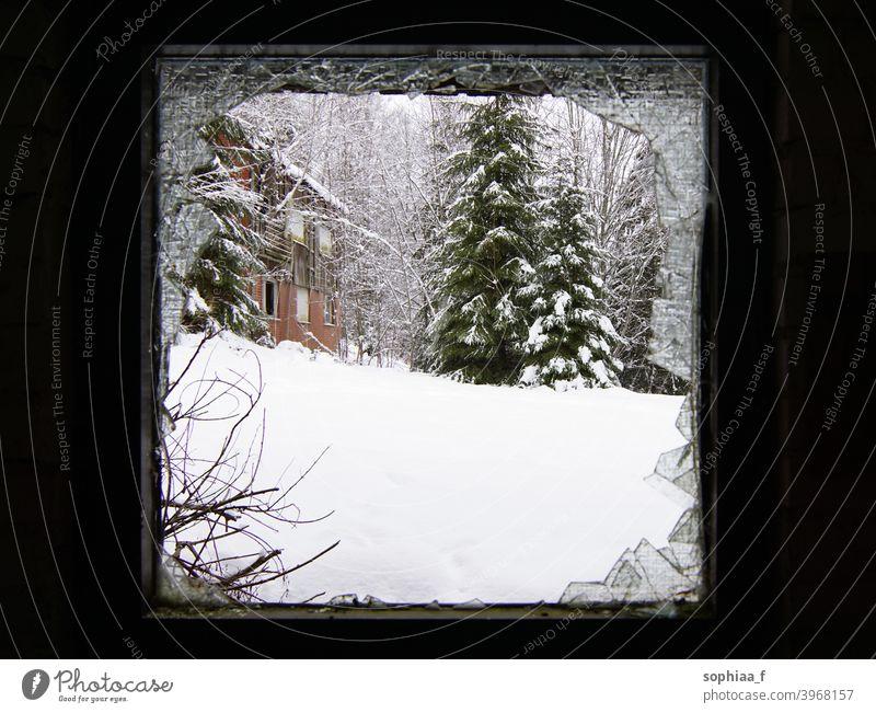 Es ist kalt draußen - Winterlandschaft durch ein kaputtes Fenster Schnee gebrochen Verwesung Tanne Rahmen Landschaft Saison Verlassen Bäume Ansicht Glas