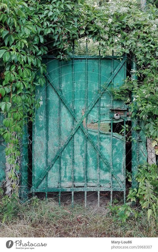 Mit Efeu umrankte grüne Tür Gartentür Tor Schloss verschlossen alt kaputt Natur Pflanzen geschlossen Menschenleer Außenaufnahme draußen Strukturen & Formen