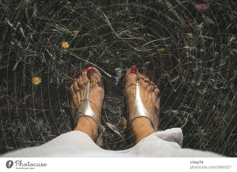 Mit rot lackierten Nägeln in Sandalen inmitten einer Blumenwiese Barfuss Blumennwiese Sommer Wiese Gras Natur draussen Erholung Sonnenstrahlen Farbfoto