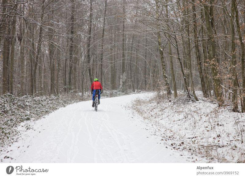 Wintersportler radfahrer Sport Schnee Wald Winterwald Natur Baum Außenaufnahme Landschaft Wintertag Schneelandschaft Schneedecke Farbfoto Winterurlaub