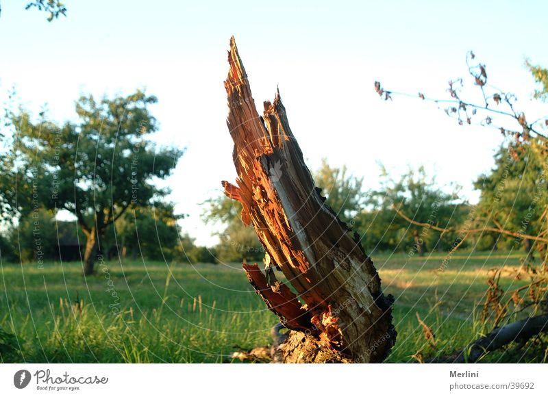 Baumstumpf Natur Wiese Blauer Himmel Streuobstwiese