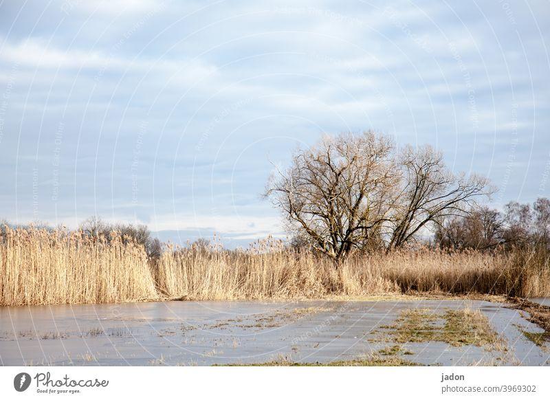vereiste flachlandschaft. Baum Winter Eisfläche Schilfrohr Frost kalt gefroren Außenaufnahme Menschenleer Wasser Umwelt Tag Natur Farbfoto Seeufer