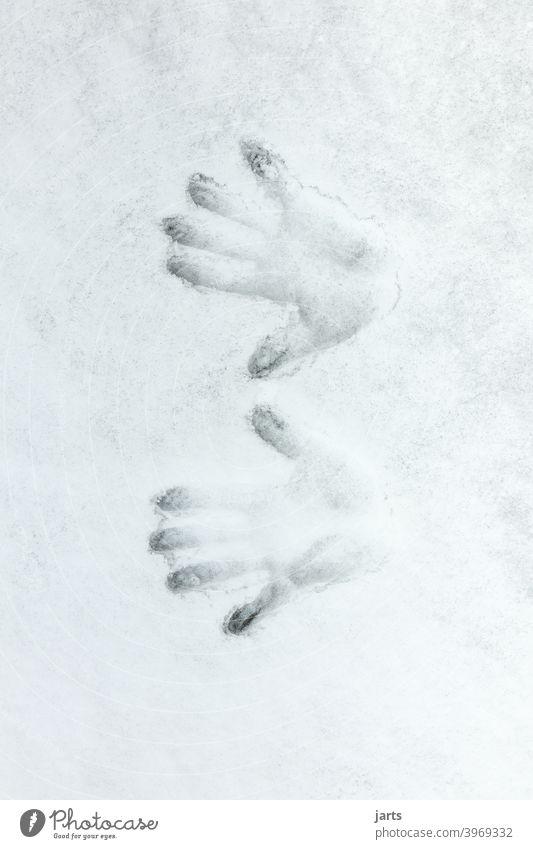 Zwei Handabdrücke im Schnee kalt Hände handabdruck Finger Winter Handabdruck Abdruck Detailaufnahme Fingerabdruck Spuren Menschenleer Handfläche weiß