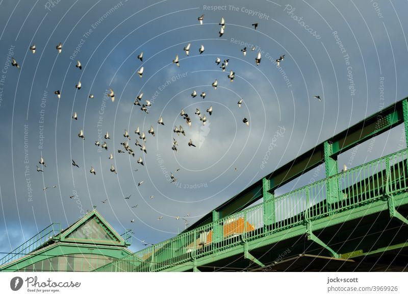 Schwärmen über der Hochbahn Eberswalder Vogelschwarm Schwarm U-Bahnstation Eberswalder Straße Schönhauser Allee Wolken Prenzlauer Berg Brücke Lichterscheinung