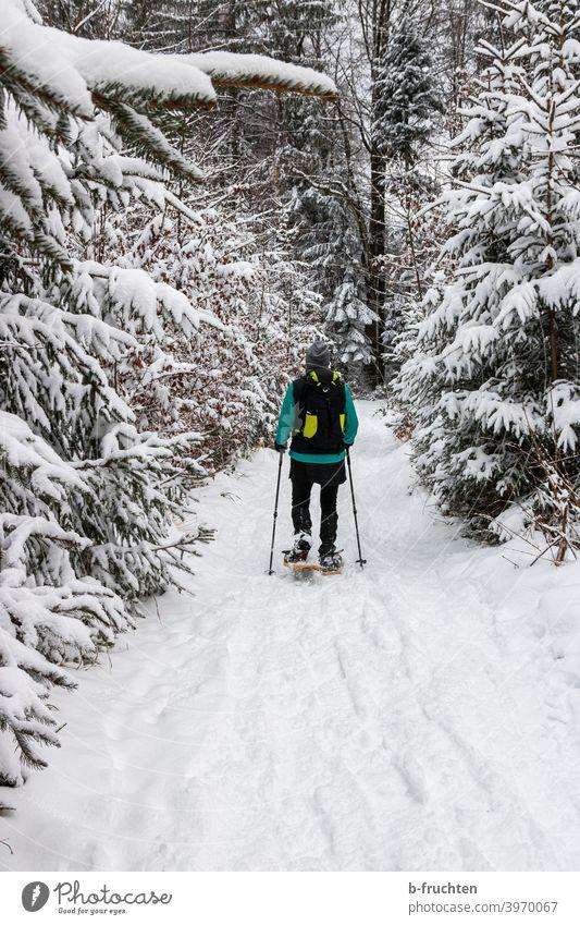 Schneeschuhwandern im Winterwald Schneeschuhe Wandern Person Frau Spuren Außenaufnahme Natur Wintersport Sport gehen Alpen Tag Freizeit & Hobby kalt