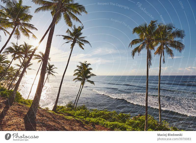 Tropischer Strand mit Kokosnusspalmen bei Sonnenaufgang. MEER Natur tropisch Paradies Handfläche schön Sonnenuntergang Meer Insel Kokospalme Landschaft