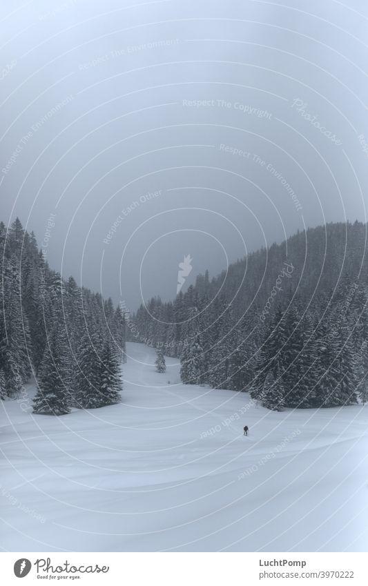 Skifahrer wandert durch einsame Schneelandschaft Einsamkeit Skitour tourengehen tourengeher verschneit Fichtenwald Wald Tannenwald verschneite Bäume