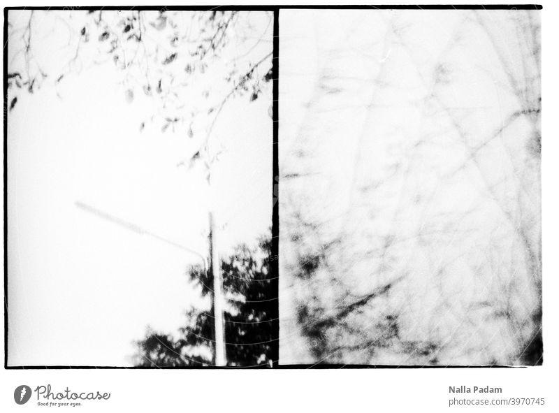 Stadtbildduett 5 analog Analogfoto schwarzweiß Halbformat Diana Mini Laterne Laternenmast Gestrüpp Geäst zwei Bilder Natur Außenaufnahme unscharf Unschärfe Baum