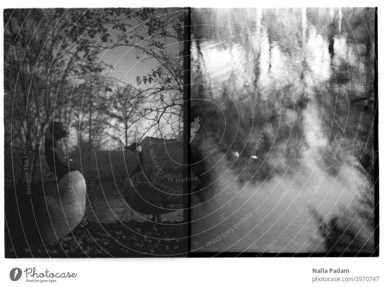 Stadtbildduett 4 analog Analogfoto schwarzweiß Gans Wasser unscharf Reflexion & Spiegelung Wasserreflexion Tier Diana Mini Halbformat zwei Bilder Bochum