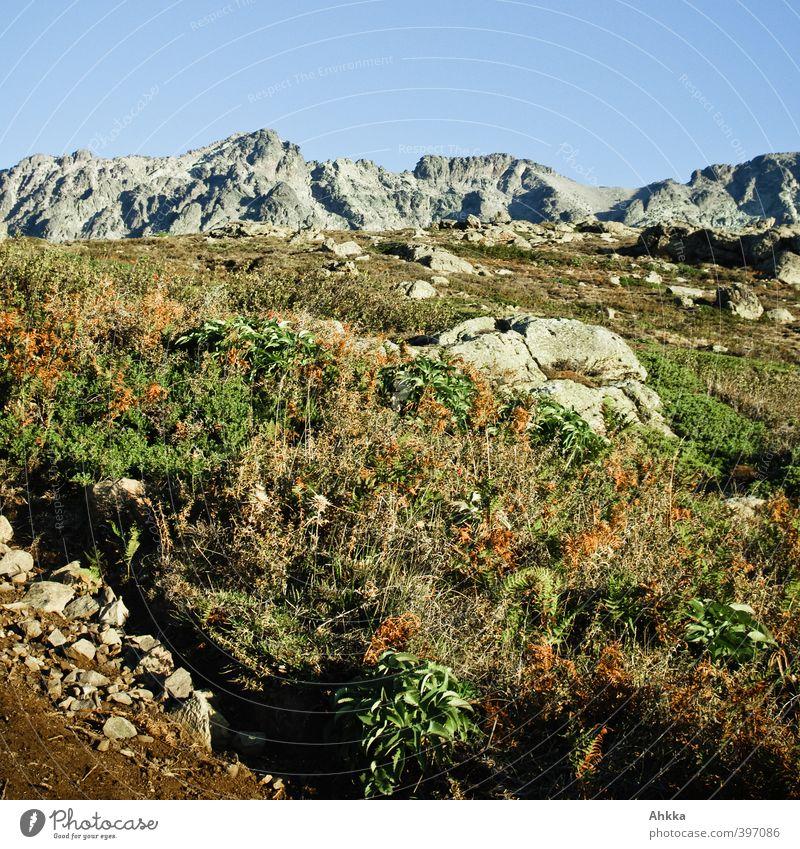 Bergflora in Korsika Himmel Natur Ferien & Urlaub & Reisen Sommer Pflanze Landschaft Blume Tier Ferne Berge u. Gebirge Freiheit Felsen Horizont Kraft Idylle