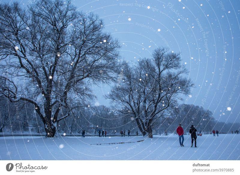 Landschaft bei Schneefall im Winter Schneeflocken Baum beschneit Christbaum Licht kalt Natur weiß Frost Wetter schlechtes Wetter Klima Winterurlaub Eis