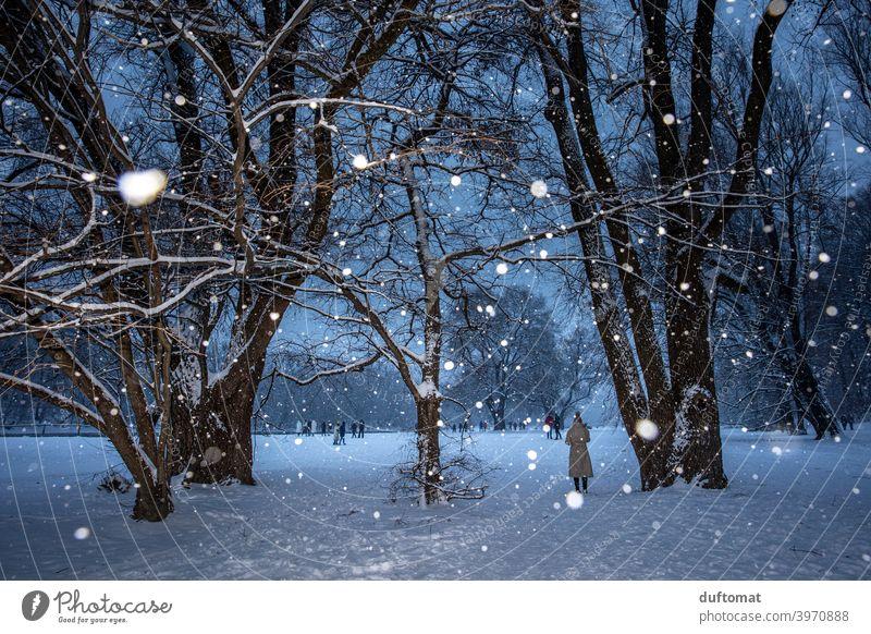 Landschaft bei Schneefall im Winter Nacht Schneeflocken Baum beschneit Christbaum Licht kalt Natur weiß Frost Wetter schlechtes Wetter Klima Winterurlaub Eis