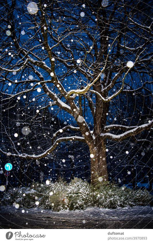 Nachtaufnahme von Baum bei Schneefall Schneeflocken beschneit Christbaum Licht Winter kalt Natur Menschenleer weiß Frost Wetter Landschaft schlechtes Wetter