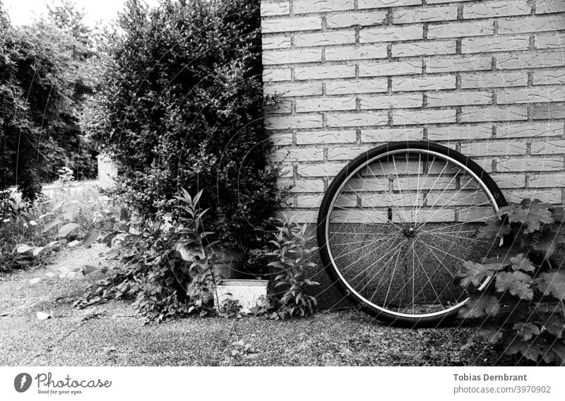 Schwarz-Weiß-Foto von Fahrrad Rad lehnt gegen eine Backsteinmauer Schwarzweißfoto Backsteinwand Rand Laufrad minimalistisch Sträucher Ziegel