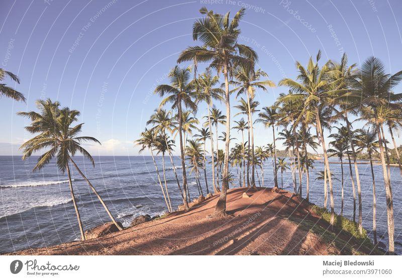 Tropischer Strand mit Kokosnusspalmen bei Sonnenuntergang. MEER Natur tropisch exotisch Paradies Handfläche schön Meer Insel Kokospalme Landschaft Ausflugsziel