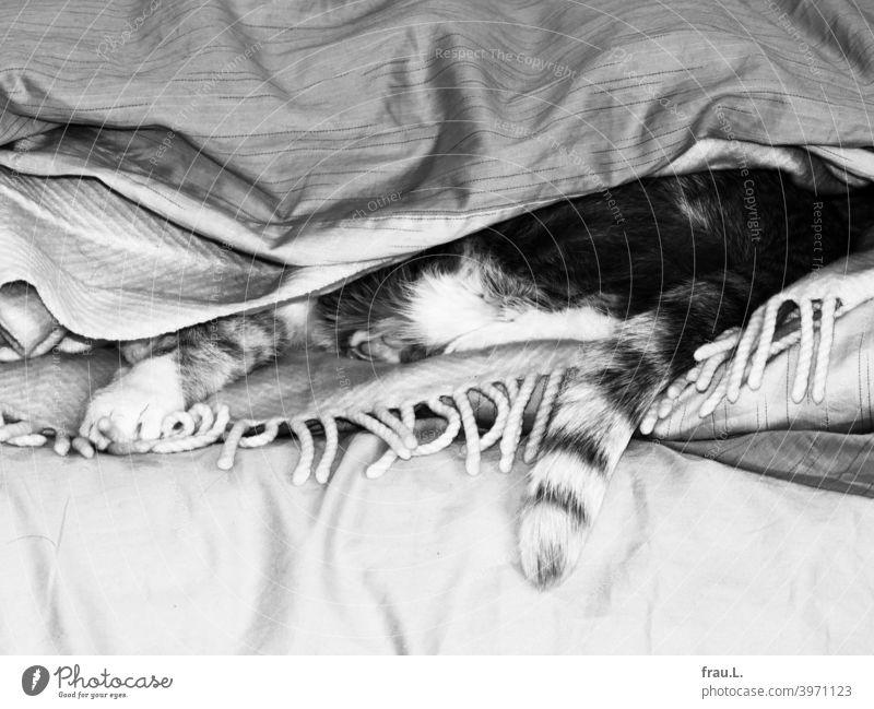 Einige Decken und ein bisschen Kater Tierporträt Haustier Fell getigert Haustiere liegen Katze Bett Wolldecke Schwanz Bettdecke